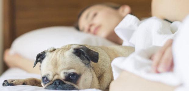 Überblick über Schlafphasen und Stadien des Schlafs. Welche Schlaf-Phasen gibt es und was bringen sie? Hier gibt's die Antworten.